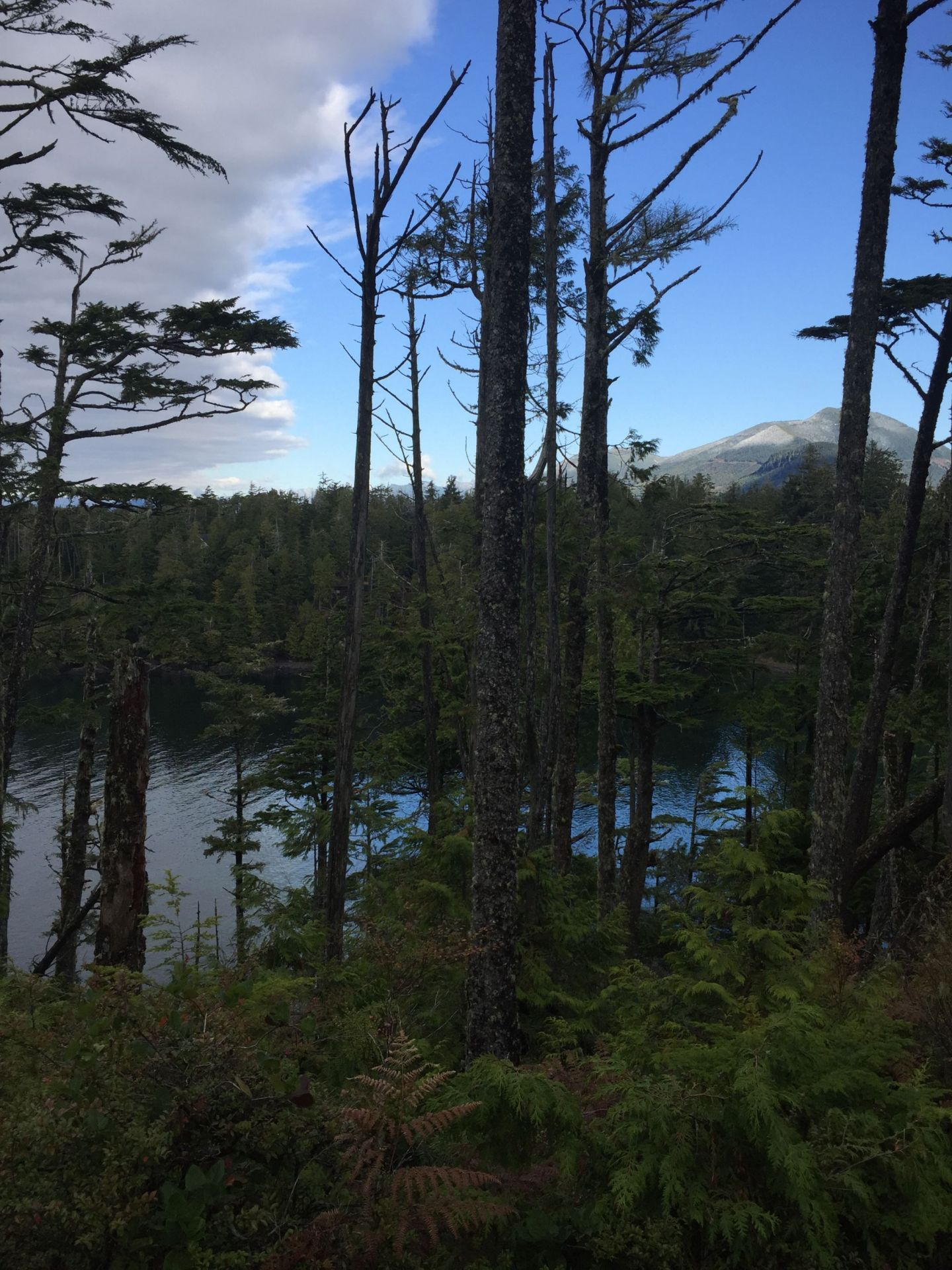 Views to the mountains and ocean near Ucluelet