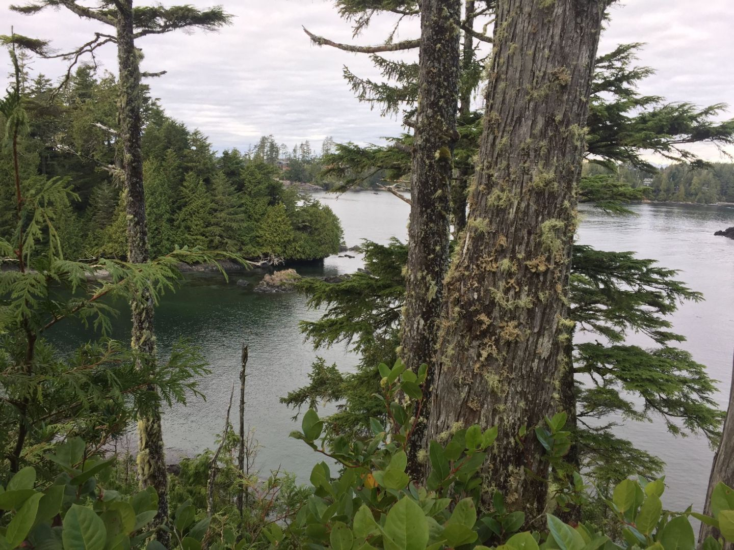 Views across the ocean on the Wild Pacific Trail, Vancouver Island