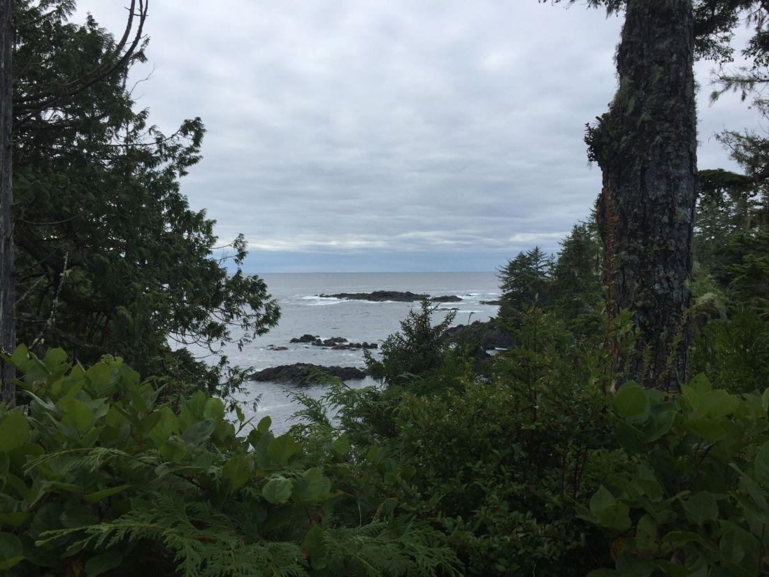 Ocean views and greenery on the Wild Pacific Trail, Vancouver Island