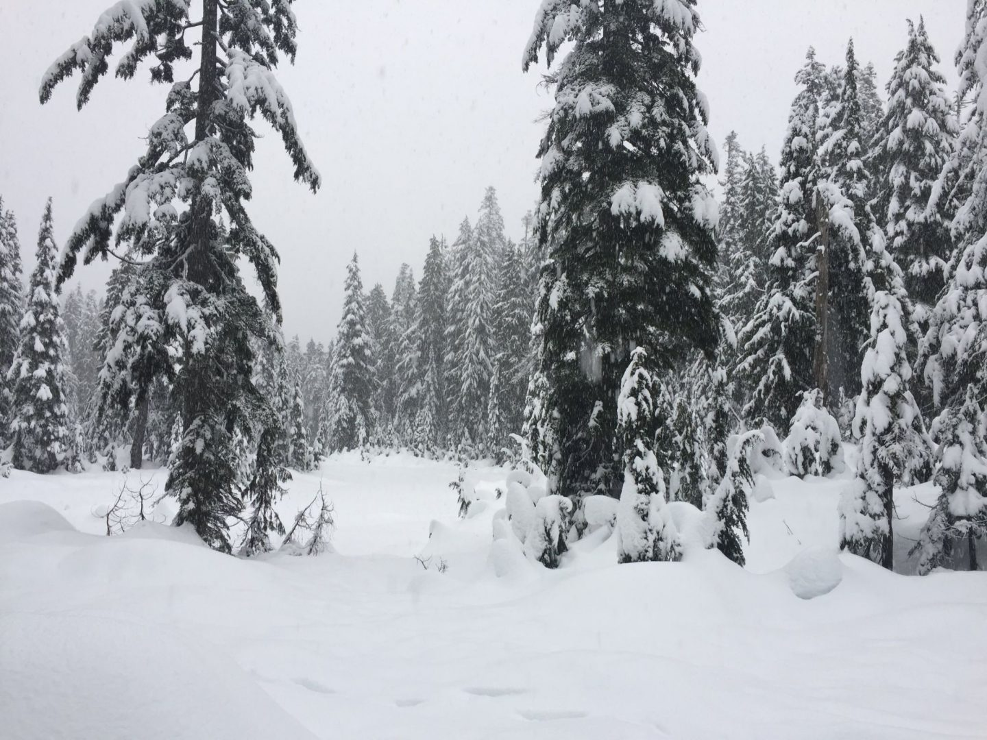 Snow and trees on Mount Seymour, Vancouver