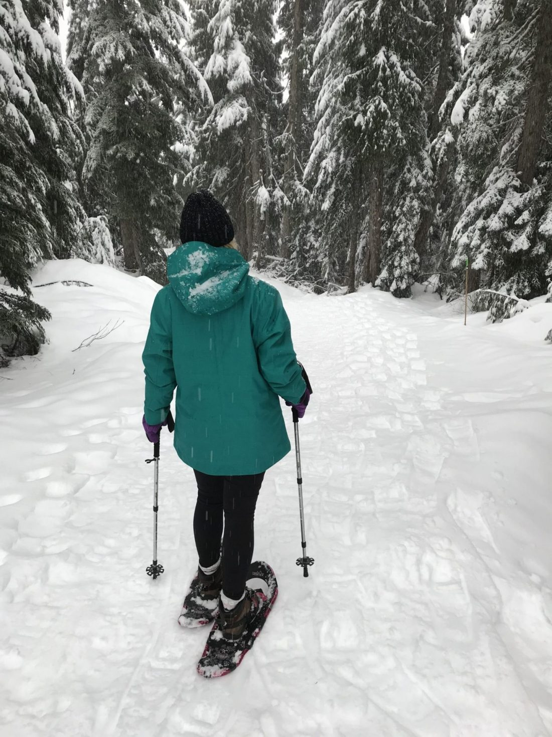 Snowshow trail on Mount Seymour, Vancouver