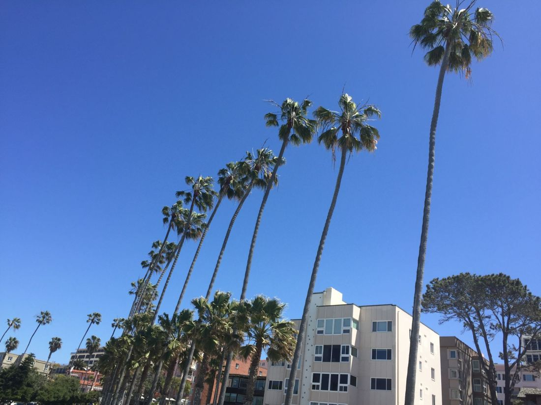 Palm trees and architecture at La Jolla