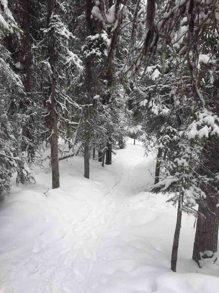 Snowy trees on a hiking trail near Lake Louise