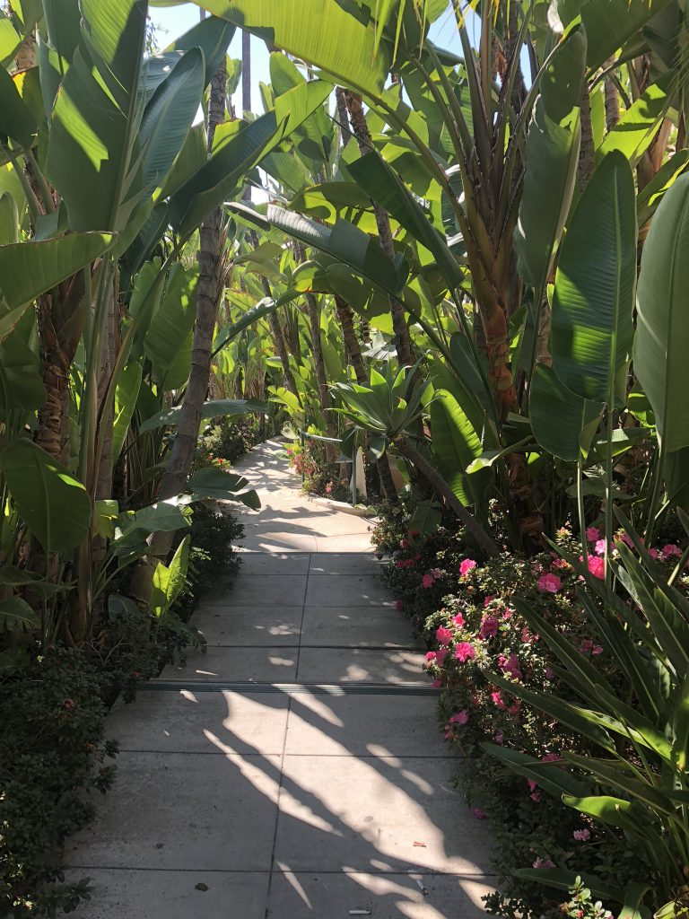 Pathway to Beverly Hills Hotel pool