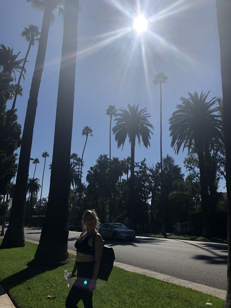 Palm trees in Beverly Hills, California