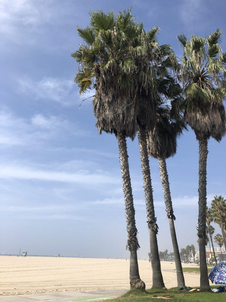Palm trees on Venice Beach, California