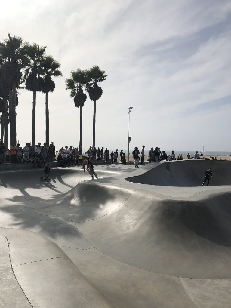 Skate ramps and palm trees on Venice Beach, California