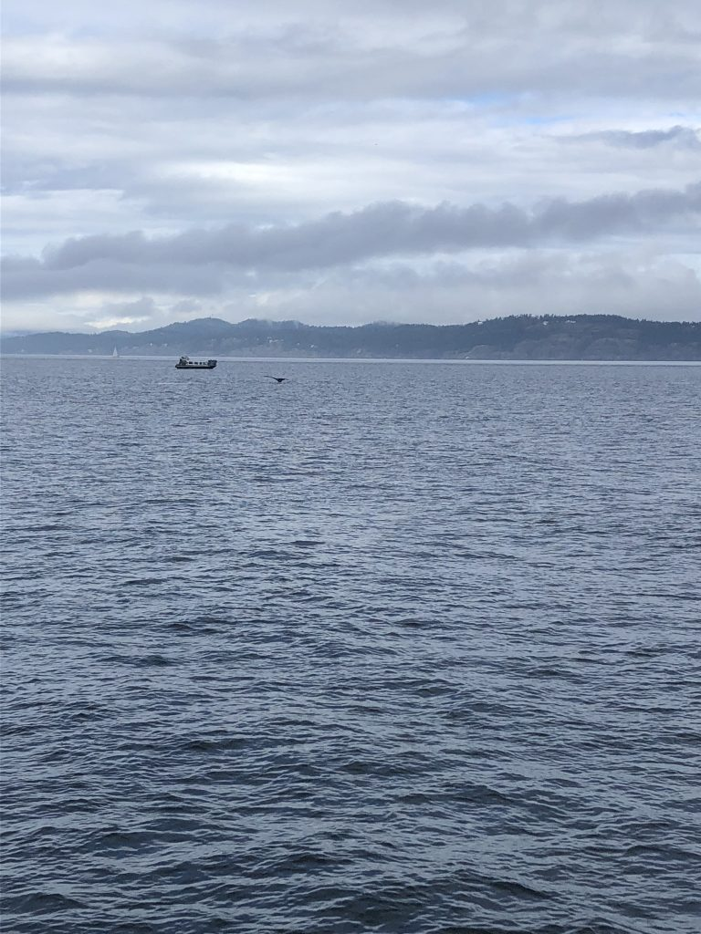 Whales in Vancouver