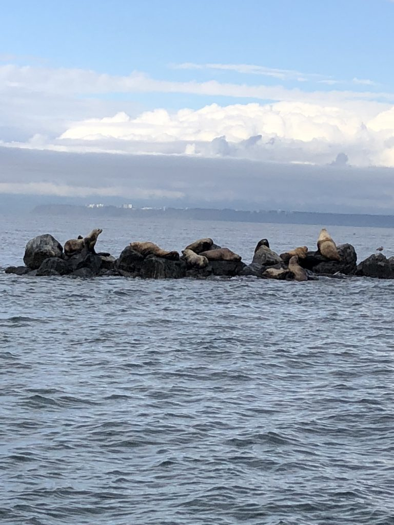 Sea lions in Vancouver