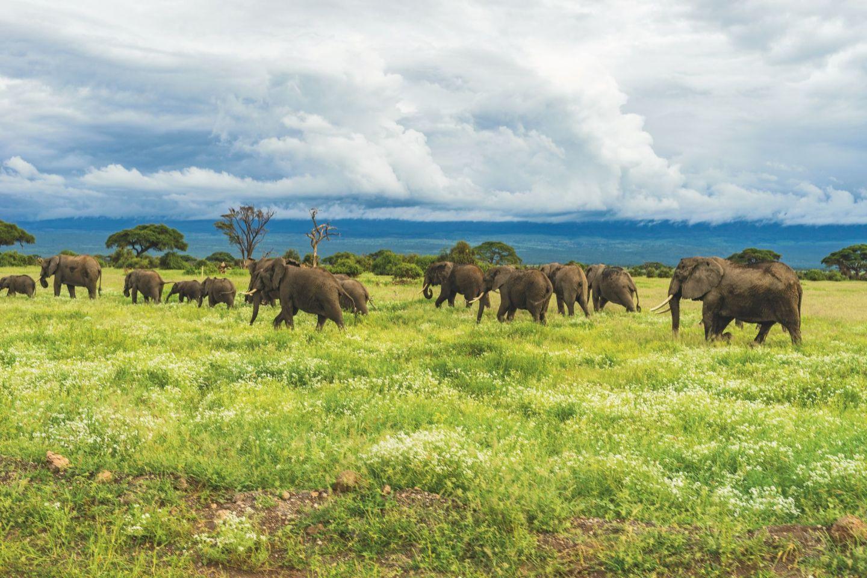Travel wish list: Tanzania, Africa
