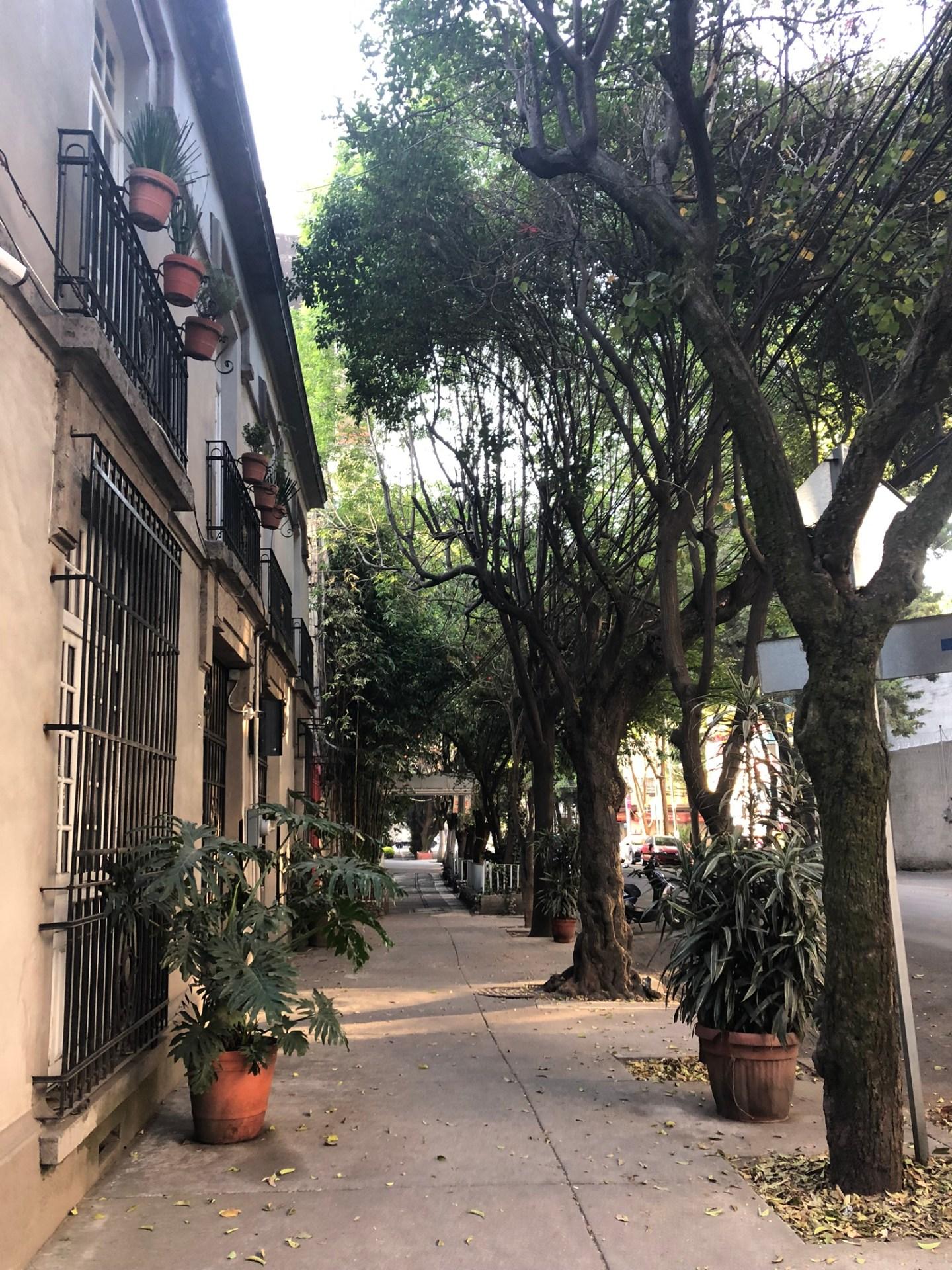 Streets of Condesa, Mexico City