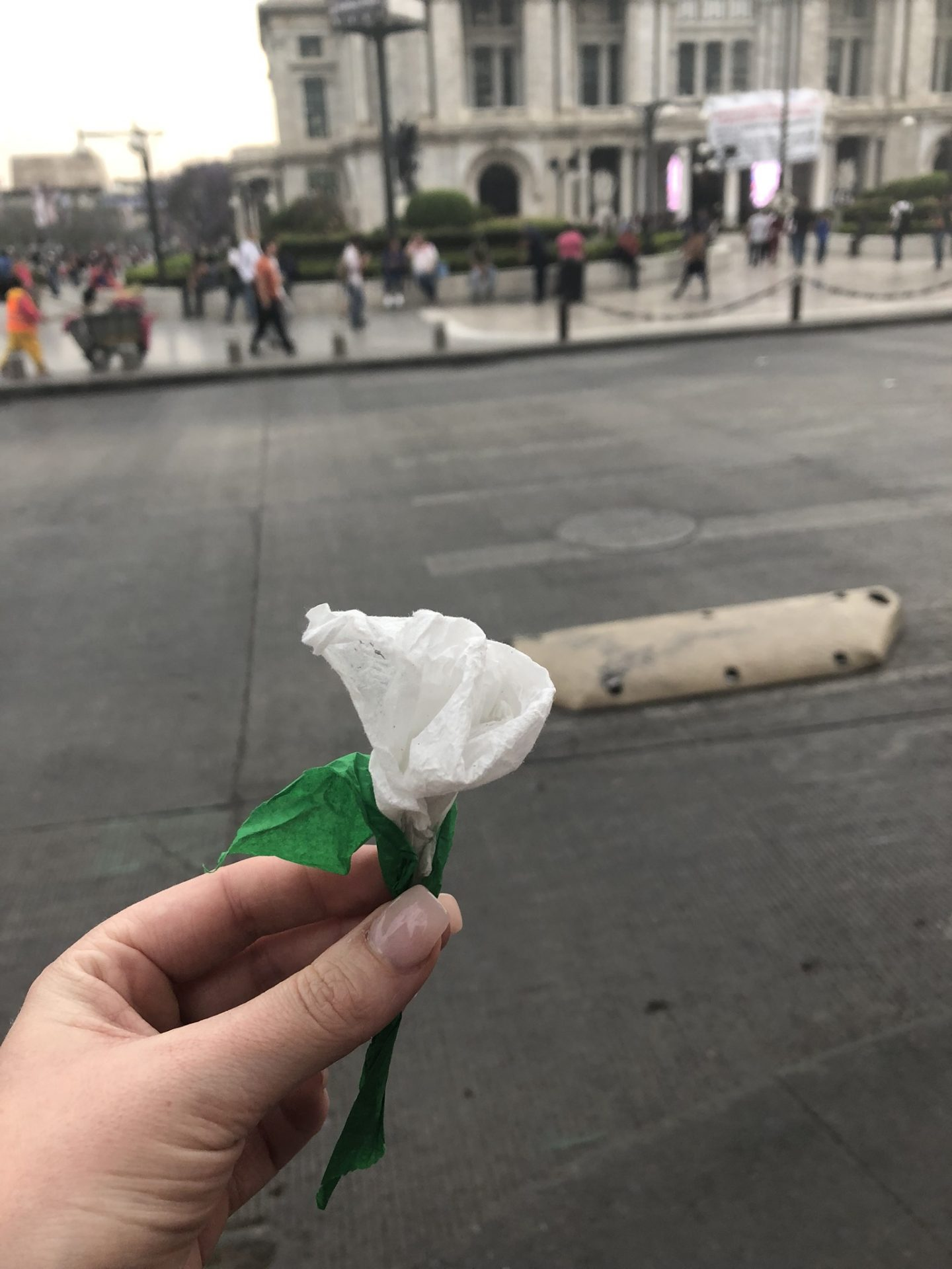 White rose on Reforma, Mexico City
