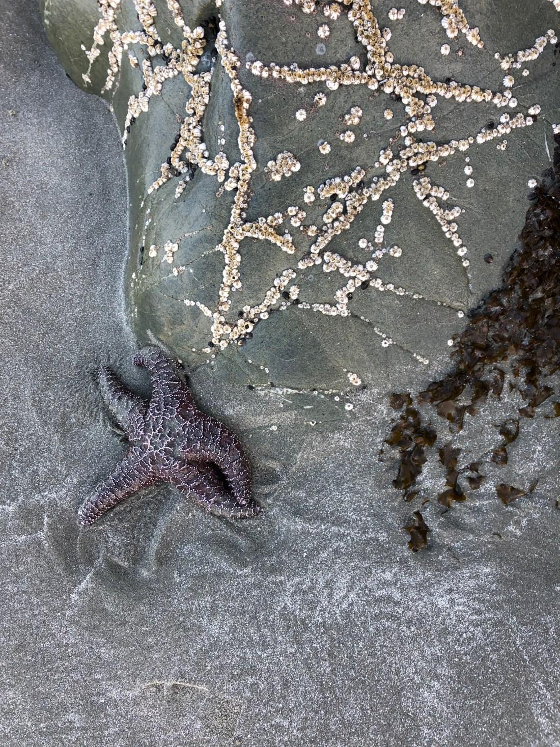 Starfish on Cox Bay Beach, Tofino