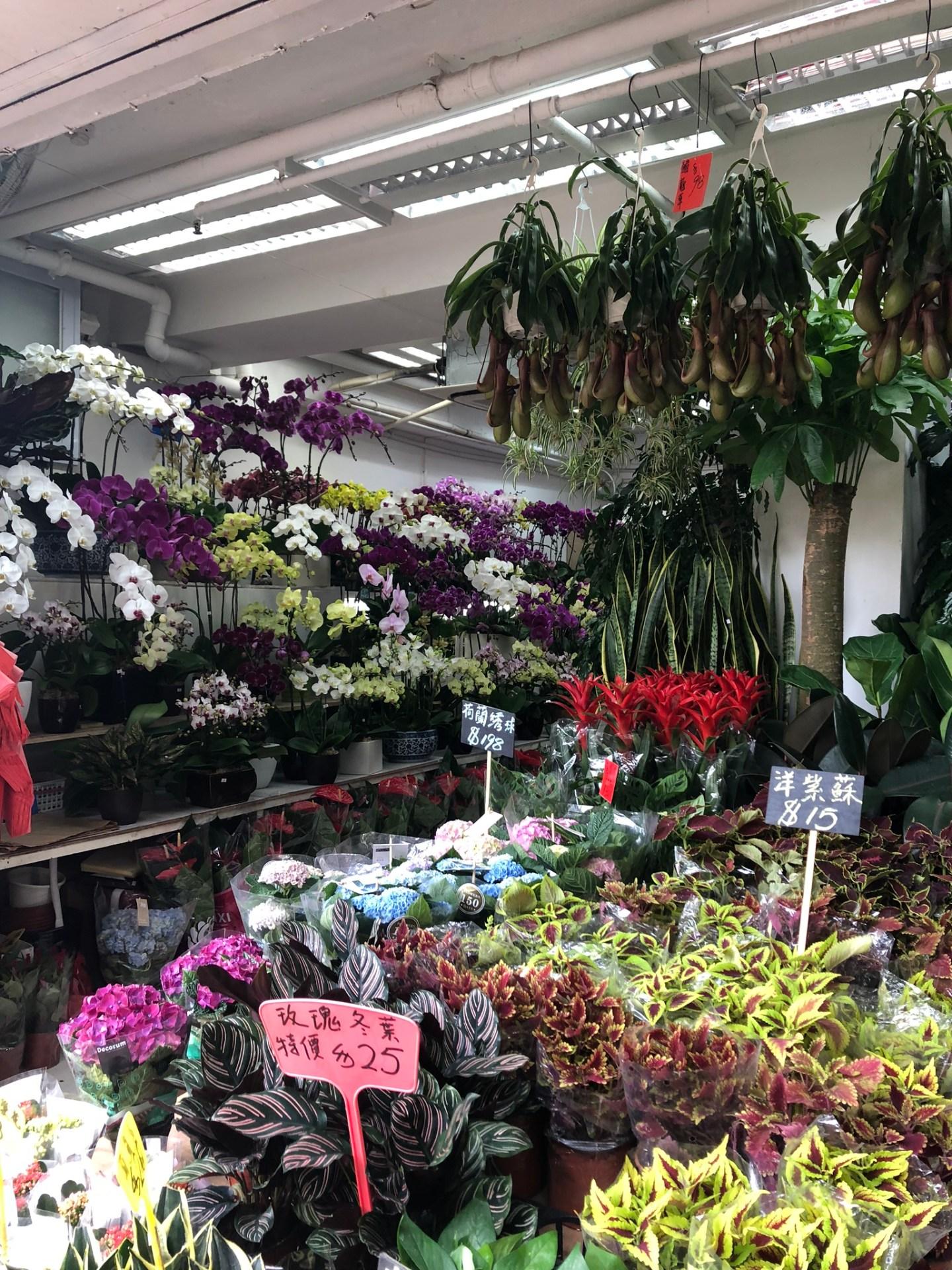 Flowers at Mong Kok Flower Market