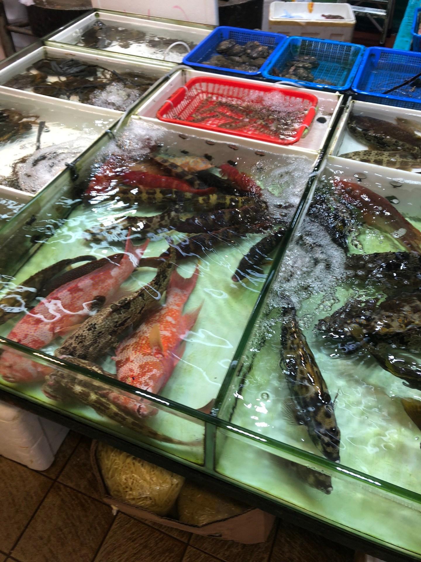 Fish for sale in Mong Kok, Hong Kong