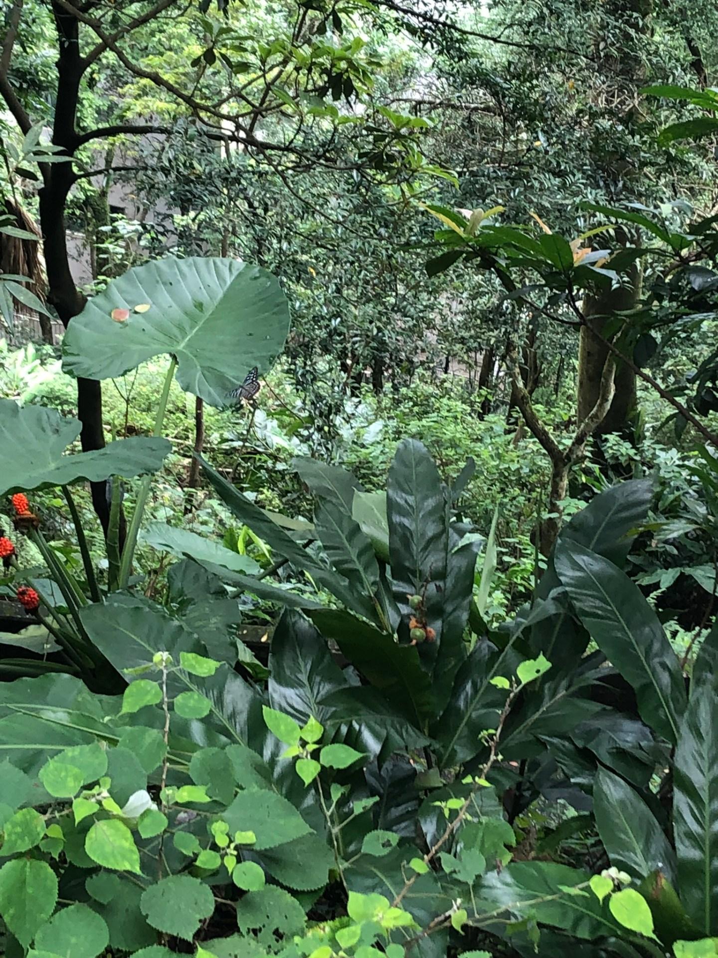 Jungle at Victoria Peak, Hong Kong