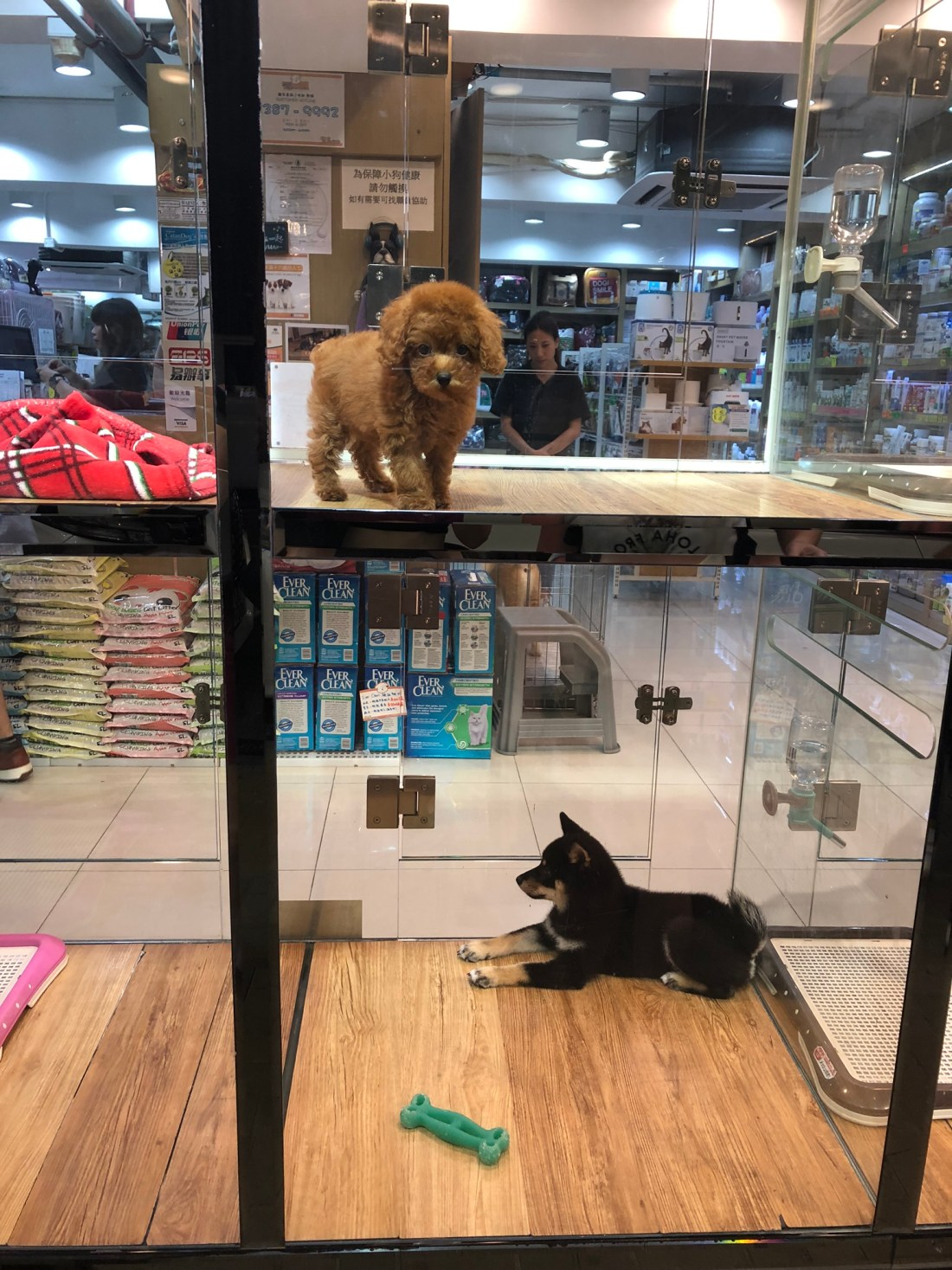 Puppies in a shop window in Hong Kong