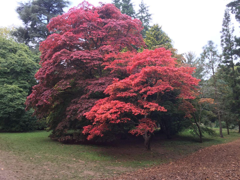 Autumn trees in the arboretum