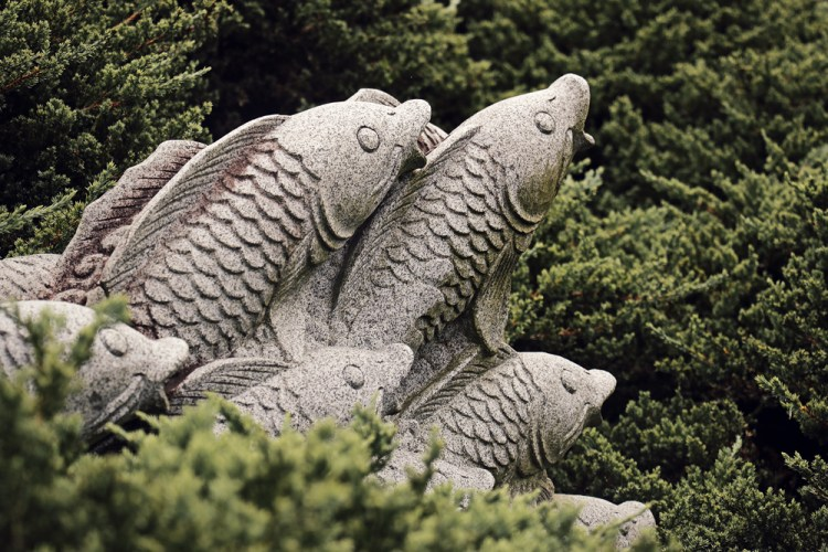 fish-in-bush