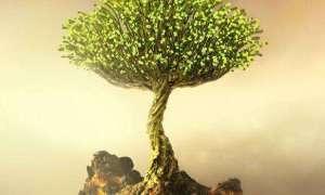 Krótka animacja o zamienianiu pustkowia w raj przez kosmitów