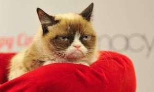 Grumpy Cat to już imperium o wartości 100 milionów dolarów