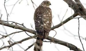 """Żyjący w zanieczyszczonym środowisku ptak okazał się być tak toksyczny, że aż… """"ognioodporny"""""""