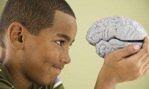 Zbadają mózg żeby stworzyć lepszą SI