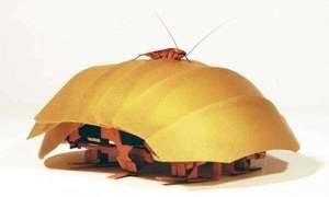 Robot – karaluch odnajdzie ludzi w gruzach