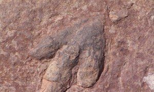 Odnaleziono największy na świecie odcisk dinozaura