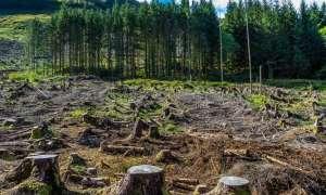Wydobycie węgla doprowadziło do zniszczenia ponad 600 tysięcy hektarów lasów
