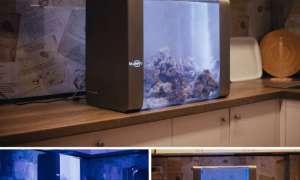 Bluenero chce stworzyć inteligentne akwarium