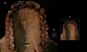 Ta małpa żyła na Ziemi ok. 12,5 mln lat temu i ważyła mniej niż 4kg