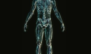 Sztuczne dyski stworzone z komórek macierzystych