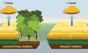 Rolnictwo ekologiczne ma negatywny wpływ na środowisko