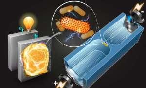 Nowa technika wyszukuje bakterie wytwarzające elektryczność