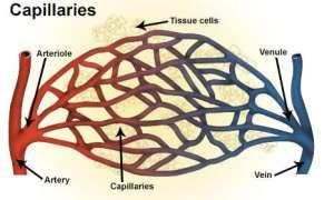 Wewnątrz ludzkich kości znajdują się tajemnicze naczynia włosowate