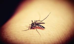 Cząsteczka powstrzymuje komary przed jedzeniem