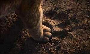 Na CinemaCon pokazano nowy zwiastun Króla Lwa. Mamy opis materiału