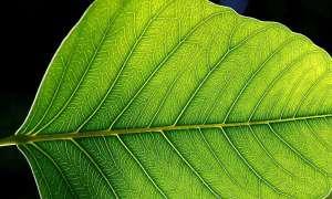 Skały na Ziemi działają niczym ogniwa fotowoltaiczne