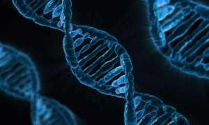 Pewna mutacja rozwinęła się u ludzi w celu pomocy w dietach o wysokiej zawartości cukru
