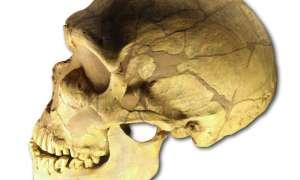 Być może wiadomo, co doprowadziło do wyginięcia neandertalczyków