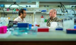 Niewielka zmiana chemiczna odwraca stan przedcukrzycowy u myszy
