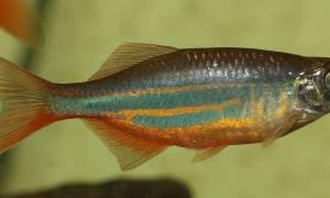 Naukowcy odkryli złożone wzorce neuronowe podczas snu ryb