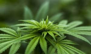 Czy palenie marihuany wśród nastolatków spada po legalizacji?