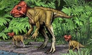 Rogaty dinozaur z Chin to krewny Triceratopsa, który chodził na dwóch nogach