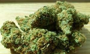 Skutki jedzenia marihuany są przedmiotem nowych badań