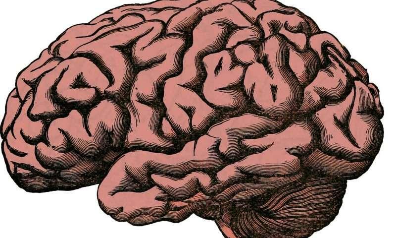 koncentracja, mózg koncentracja, psychika koncentracja, psychicznie chora koncentracja, pacjent koncentracja,
