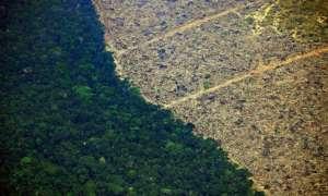 Pożary w Amazonii – winne głównie dwie branże