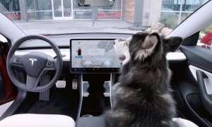 Tesla zareagowała szybko na błąd w samochodowym trybie psa
