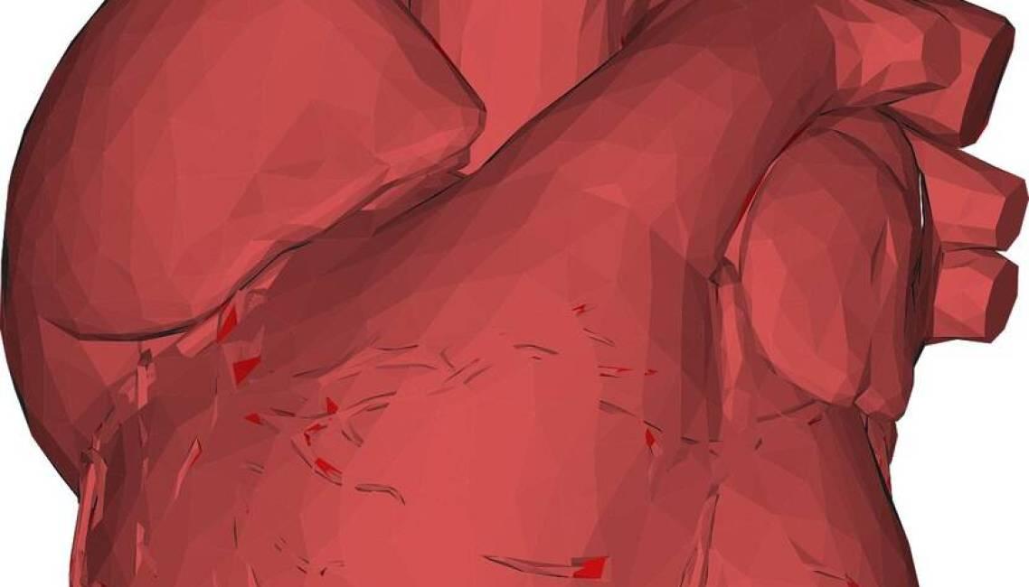 regeneracja serca, mechanizmy regeneracja serca, działanie regeneracja serca, człowiek regeneracja serca, myszy regeneracja serca,